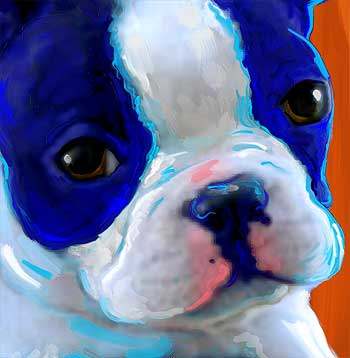 boston terrier puppy art