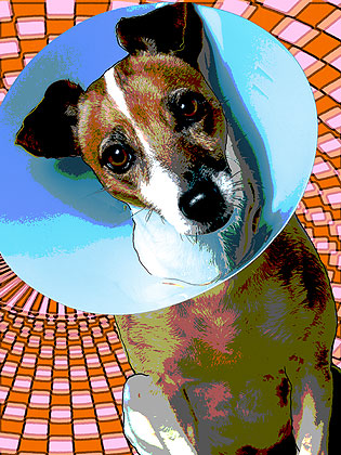 dog pop art