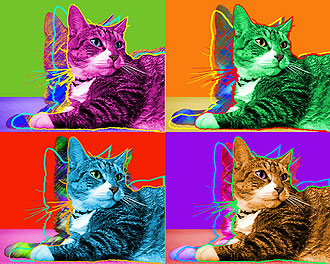 tabby cat pop art